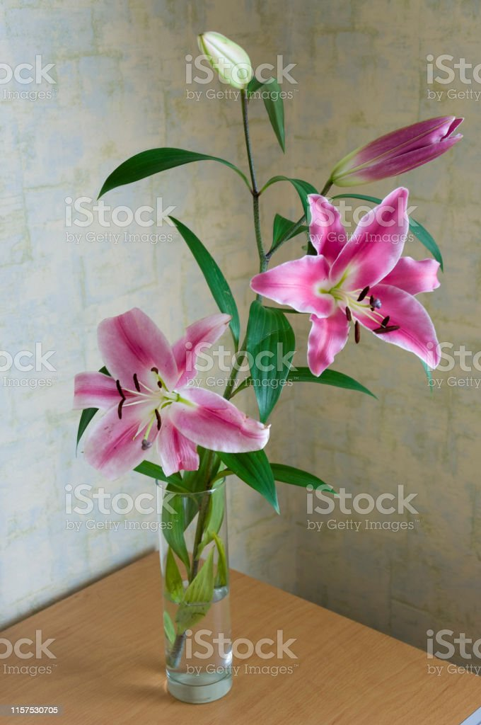 Tender big pink flowers of lily is standing in the glasses vase on...