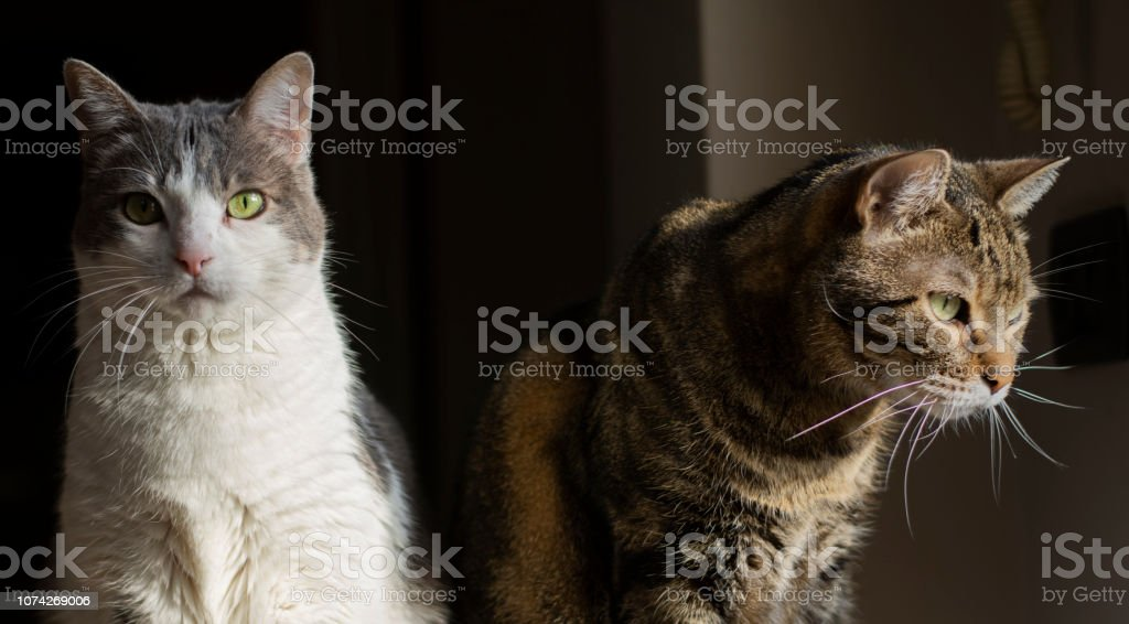 A tender couple of cats lit up at the window