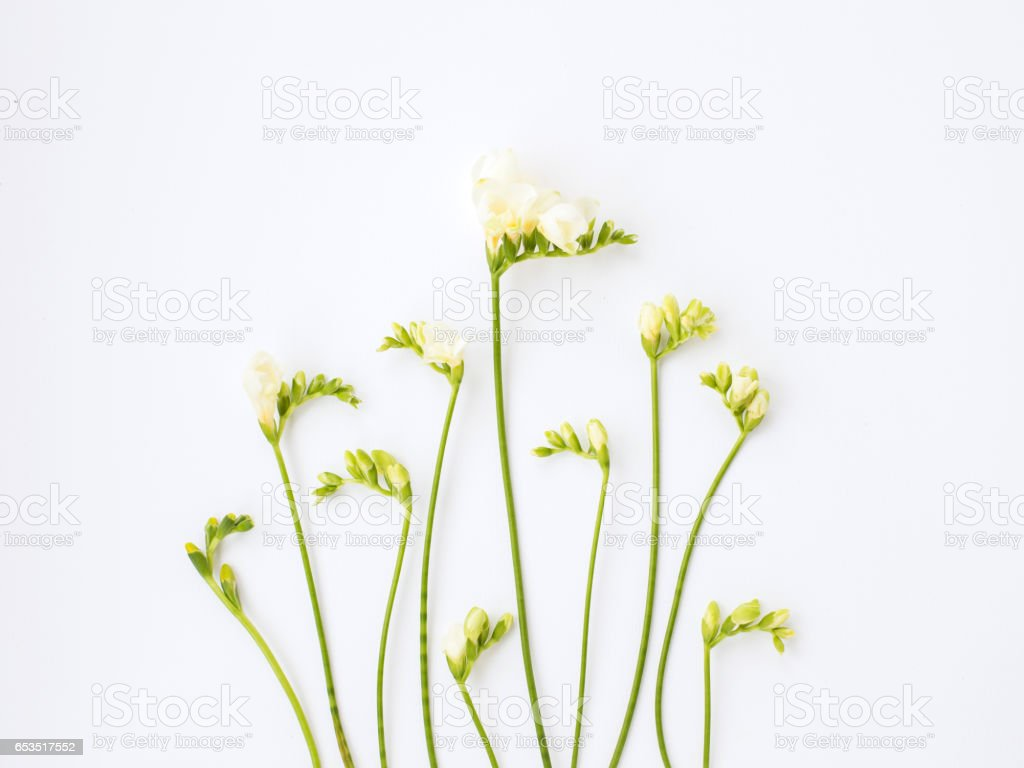 Tender Freesia on white background стоковое фото
