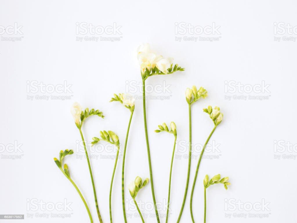 白色背景上的溫柔小蒼蘭圖像檔