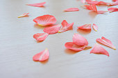 tender fresh pink petals scattered on a light wooden table top