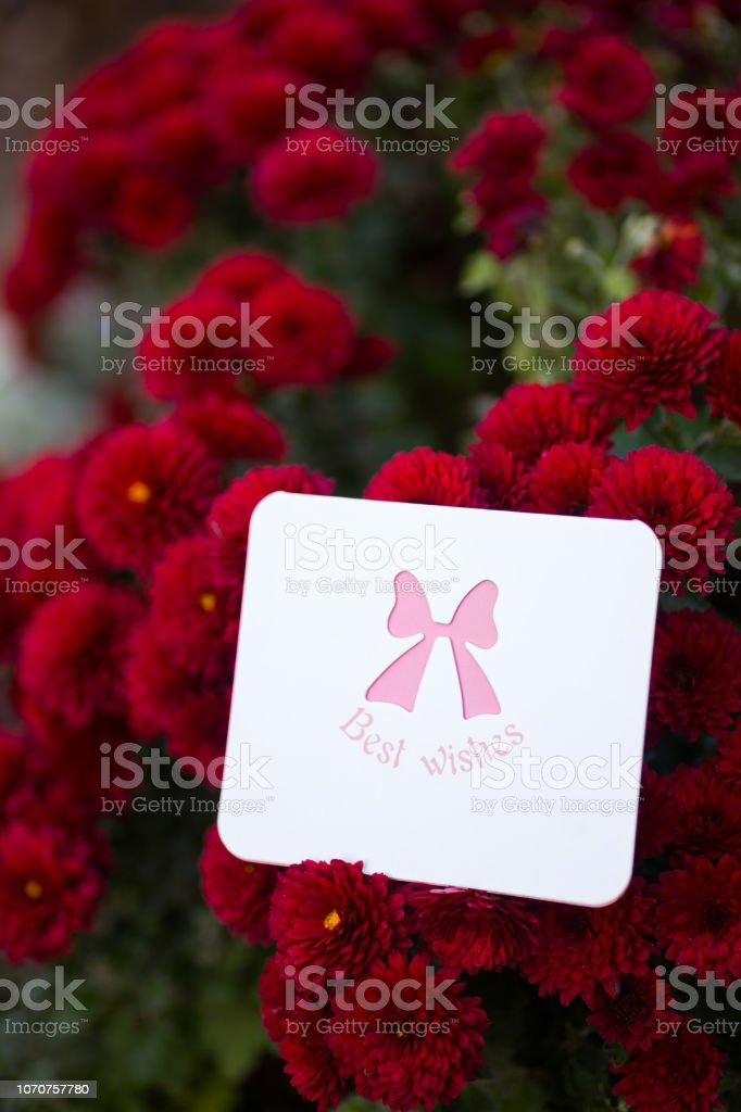 Tender greeting card with best wishes surrounded by flowers of red chrysanthemum. stock photo