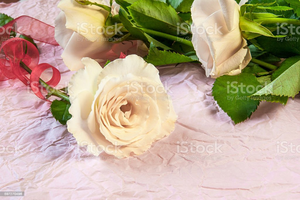 Tenderly pink roses royalty-free stock photo