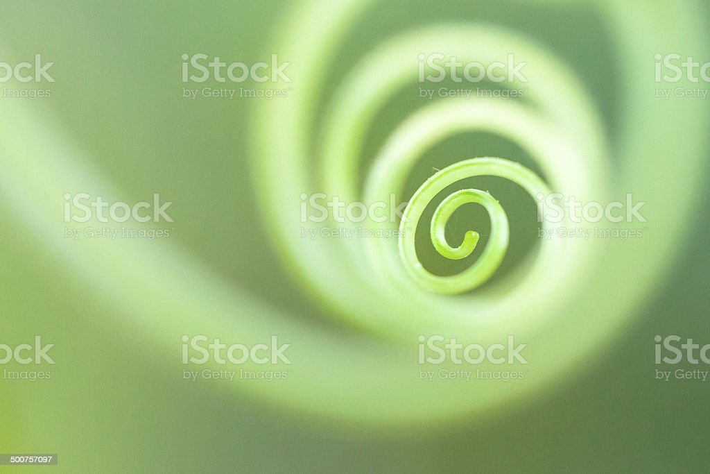 Tendril Spiral Circle Abstract in Summer Garden stock photo