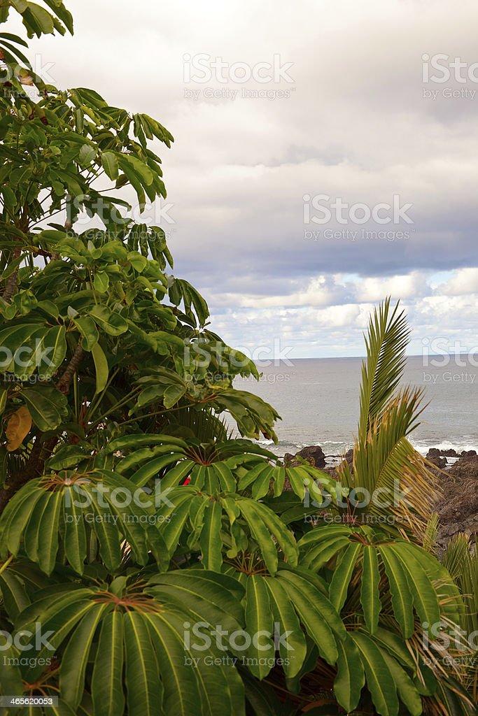 Tenerife coast royalty-free stock photo