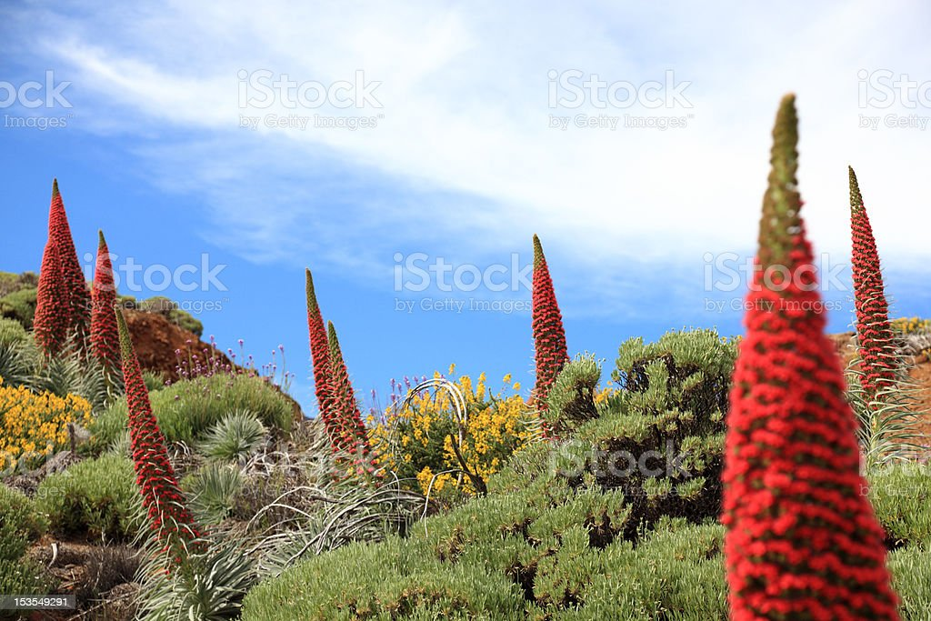 Tenerife plants stock photo