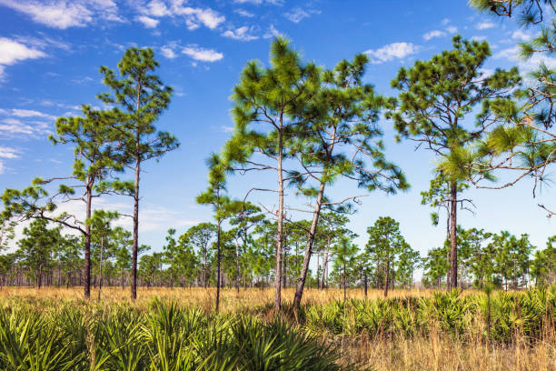 Tens of thousands of acres of Florida Scrub Lands are preserved and protected by both private conservancies, and public county and state entities to ensure residents and eco-tourists can enjoy this wilderness in perpetuity