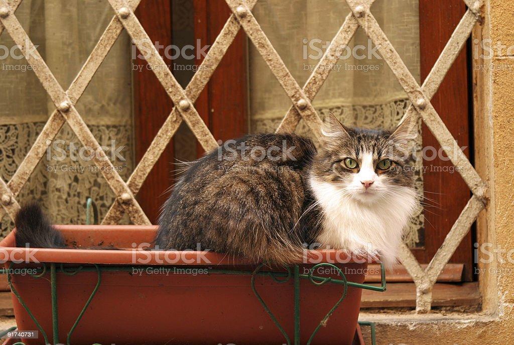 Tense Cat royalty-free stock photo