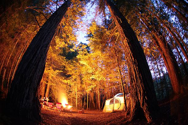 Tent Camping In Redwoods National Park stock photo