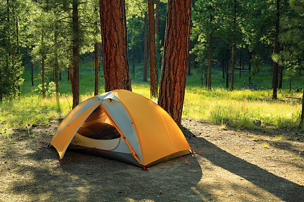 Tent Camping Tent camping in a wooded campground in Santa Fe National Forest, New Mexico. tent stock pictures, royalty-free photos & images