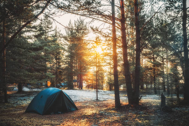 Tent in a pine forest on sunset Tent in a pine forest on sunset. Rest in the tent. Camping in the forest near the lake. Unity with nature sun shining through dresses stock pictures, royalty-free photos & images