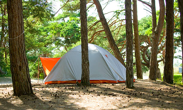 Zelt in forest.JH – Foto
