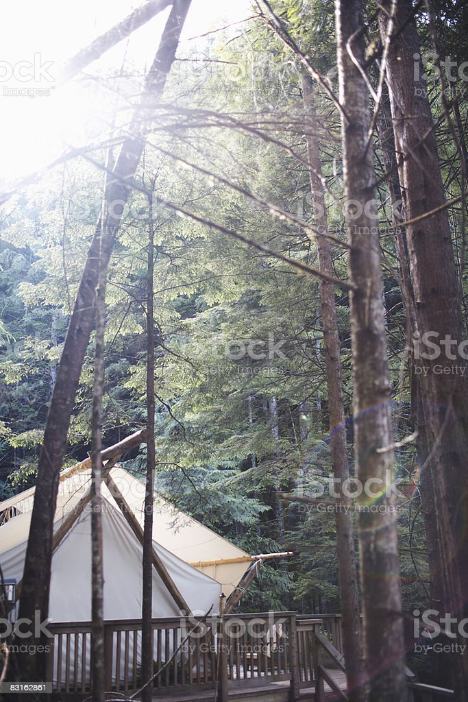 Tent in the forest. royalty free stockfoto