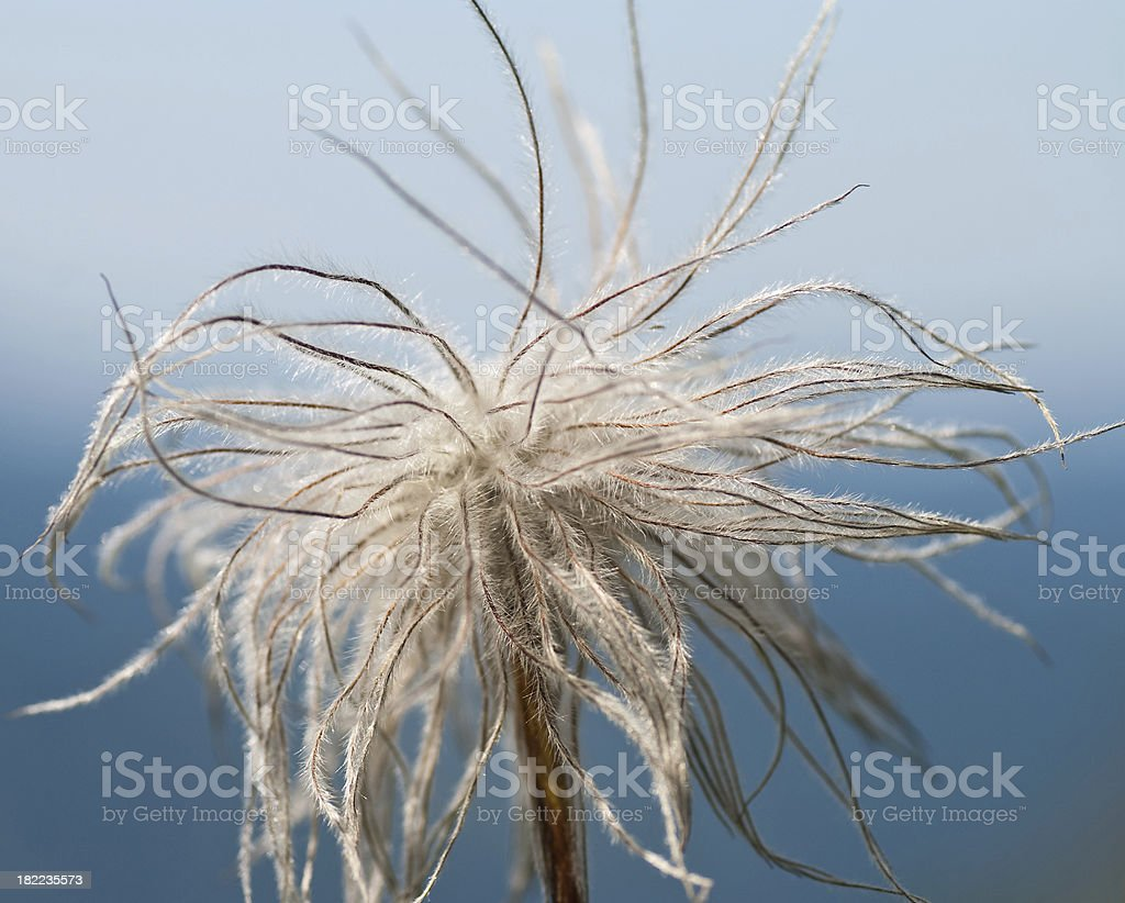 tentacle plant royalty-free stock photo