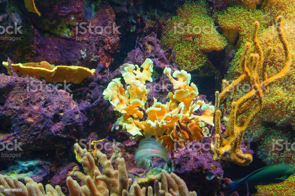 Tentacles of a pink sea anemone foto de stock libre de derechos