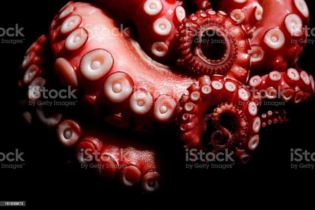tentacles of octopus stock photo