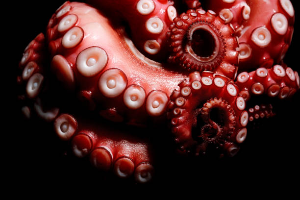 tentacles of octopus - octopus stock pictures, royalty-free photos & images