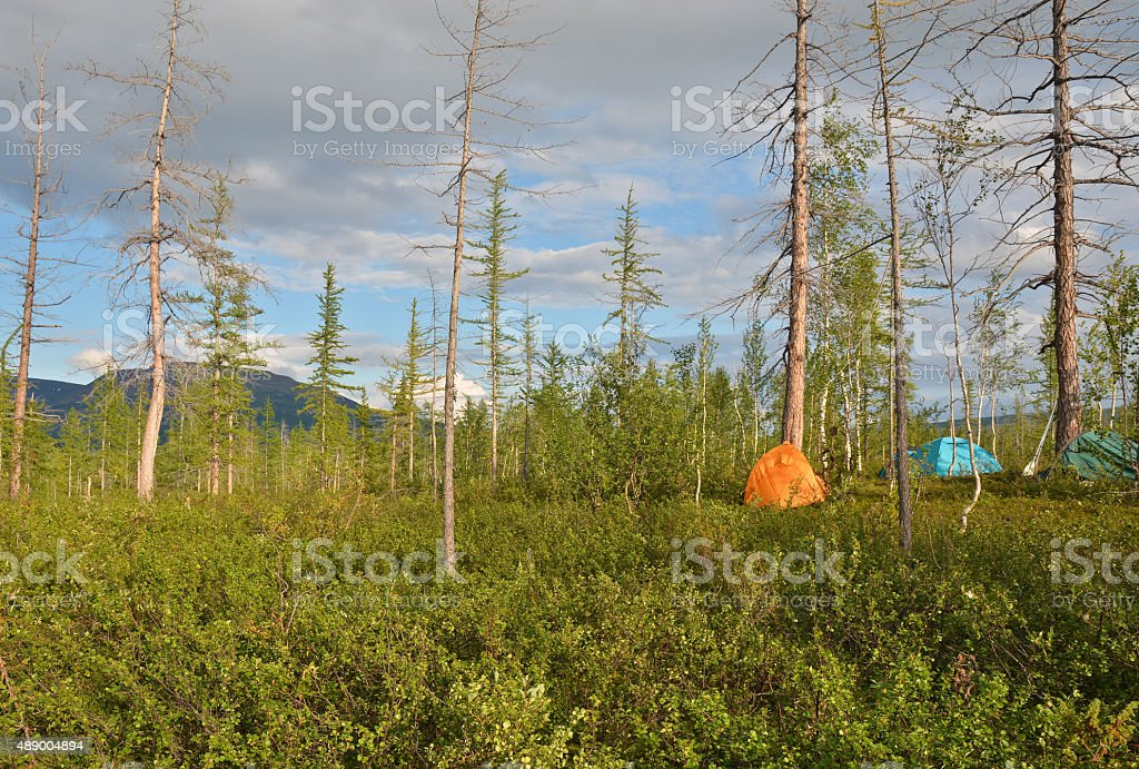 Tents in the taiga. stock photo