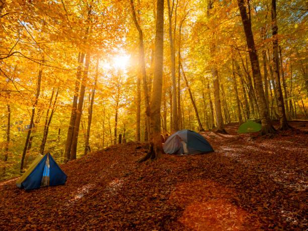 숲에서 텐트 - 볼루 뉴스 사진 이미지