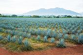 istock Tequila Landscape 498857886