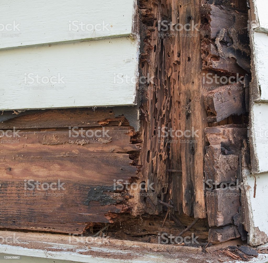 Termite and Rot Damage stock photo