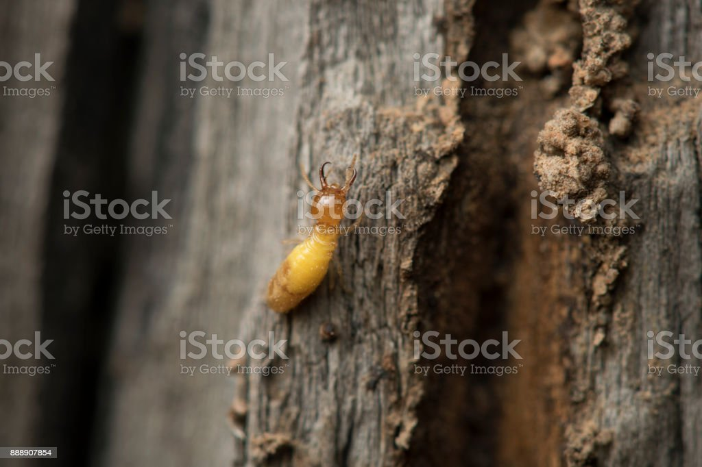 Termite and Termite mound on nature background. stock photo