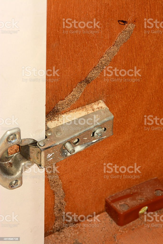 Termite damage Path stock photo