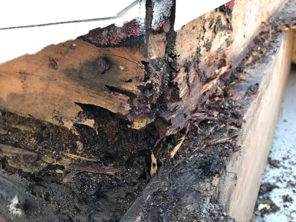 termiet schade - termietenheuvel stockfoto's en -beelden
