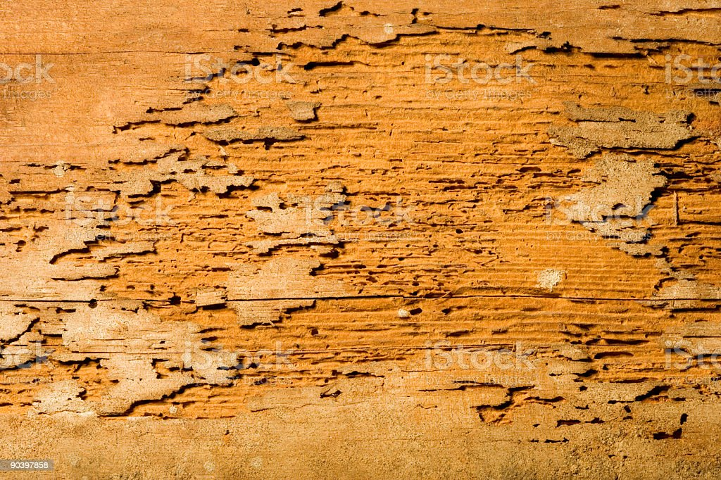 Termite Damage royalty-free stock photo