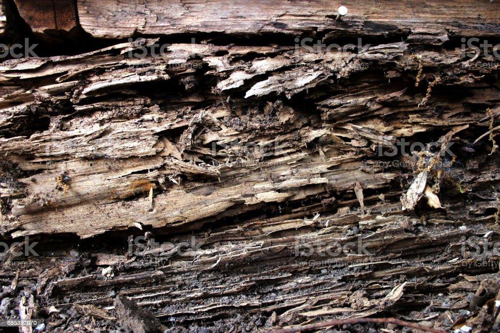 Termite Damaged wood 1 foto de stock royalty-free