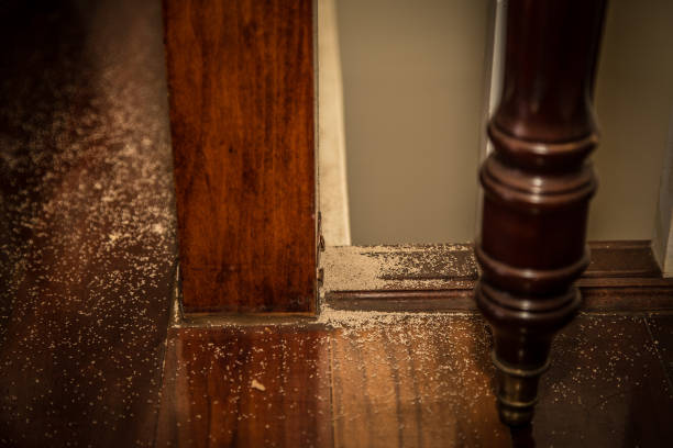 Termite Dropping Indoors evidence of termites in the house. droppings from banister showing proof. termite stock pictures, royalty-free photos & images