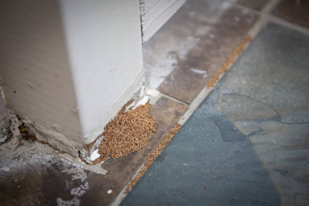 termite droppings at an outside banister termite droppings at an outside banister termite stock pictures, royalty-free photos & images