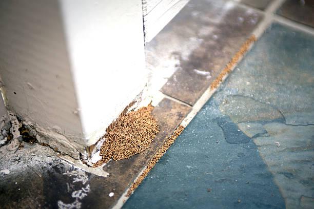 termite droppings - termietenheuvel stockfoto's en -beelden