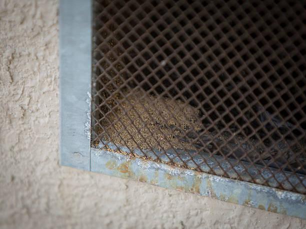 termite droppings visual from outside - termietenheuvel stockfoto's en -beelden