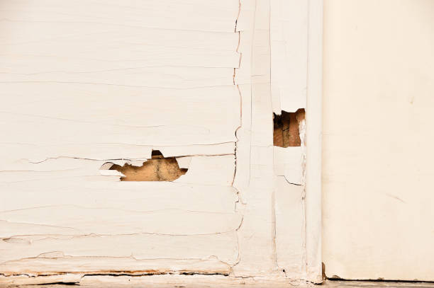 Termite eat wooden door The wood door with termites damage isoptera stock pictures, royalty-free photos & images