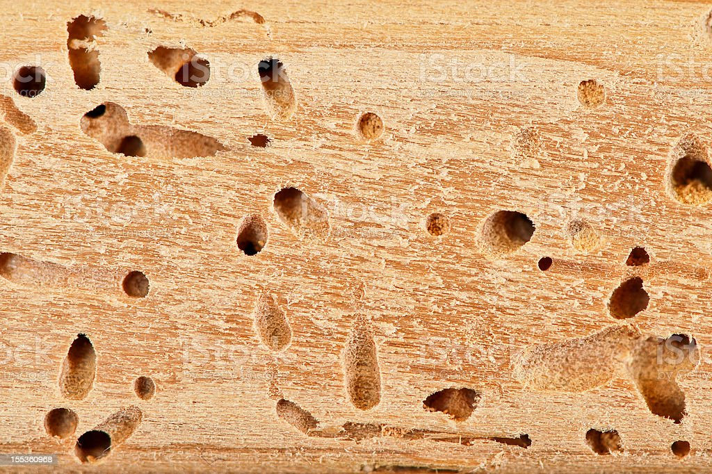 Termite hole close up stock photo