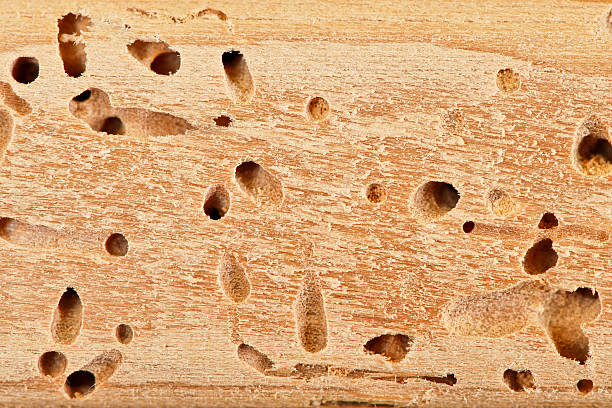 Termite hole close up Termite hole close up. termite stock pictures, royalty-free photos & images