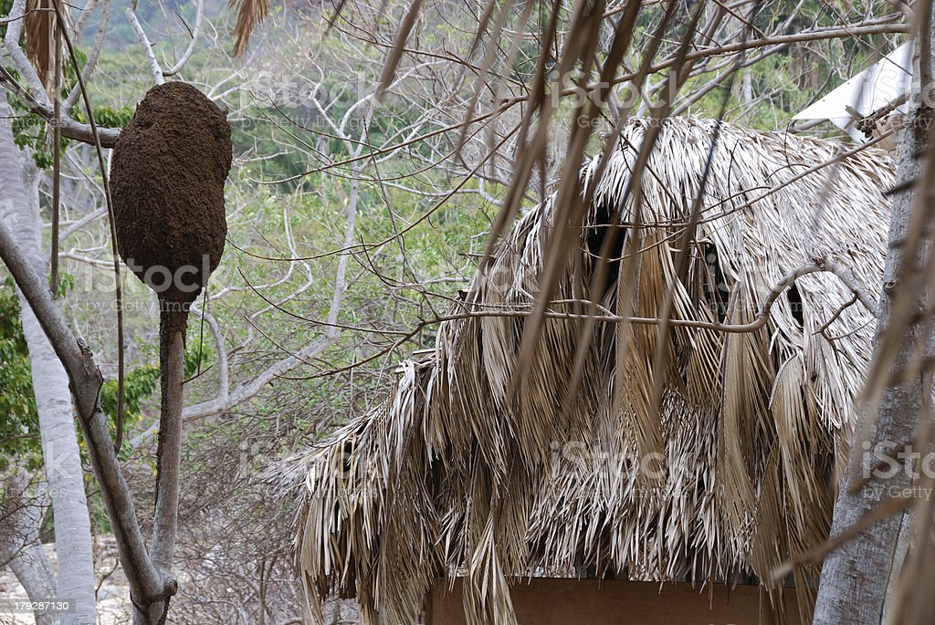 Termite house and Thatched roof stock photo