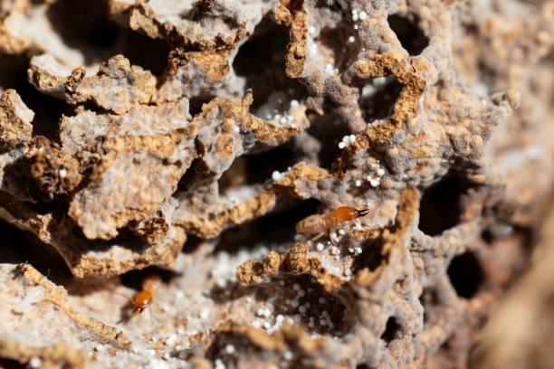 termiet in tunnels van het mierennest - termietenheuvel stockfoto's en -beelden