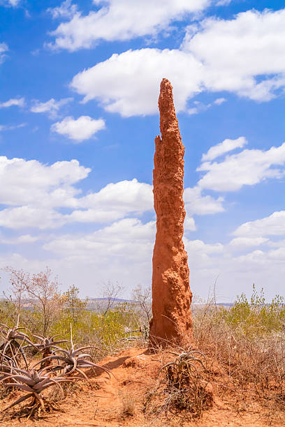 termite moud in ethiopia - termietenheuvel stockfoto's en -beelden