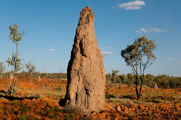 termite mound - australia - termietenheuvel stockfoto's en -beelden