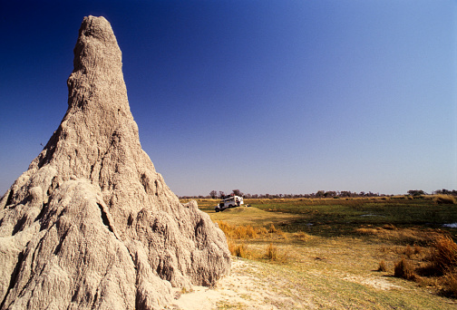 Termite Mound Botswana Stock Photo - Download Image Now - iStock