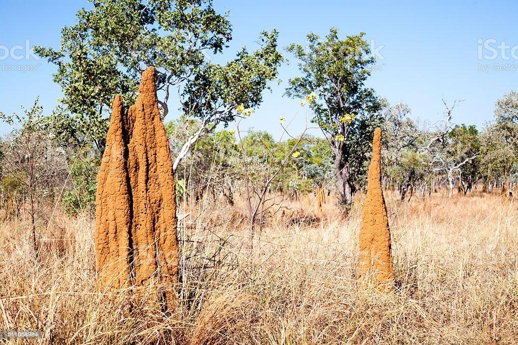 Termitero en Australia foto de stock libre de derechos