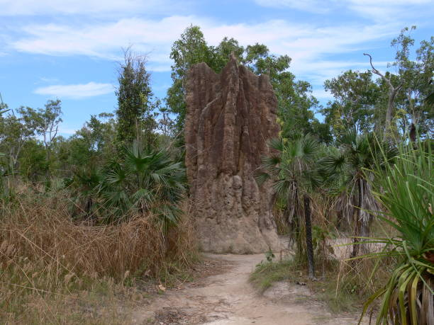 Termite Mound in Litchfield National Park in Australia stock photo