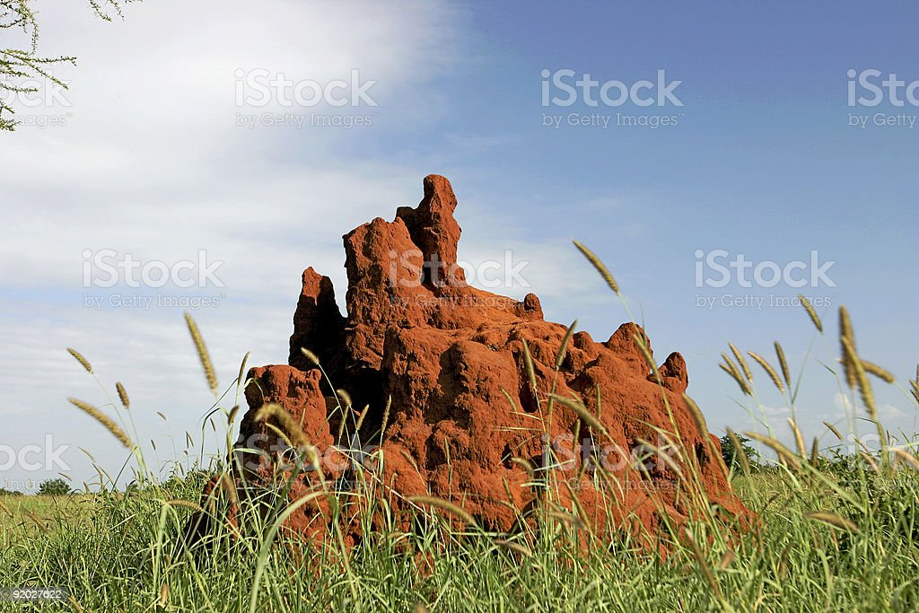 Termite Mound in Tarangire Park, Tanzania, Africa royalty-free stock photo