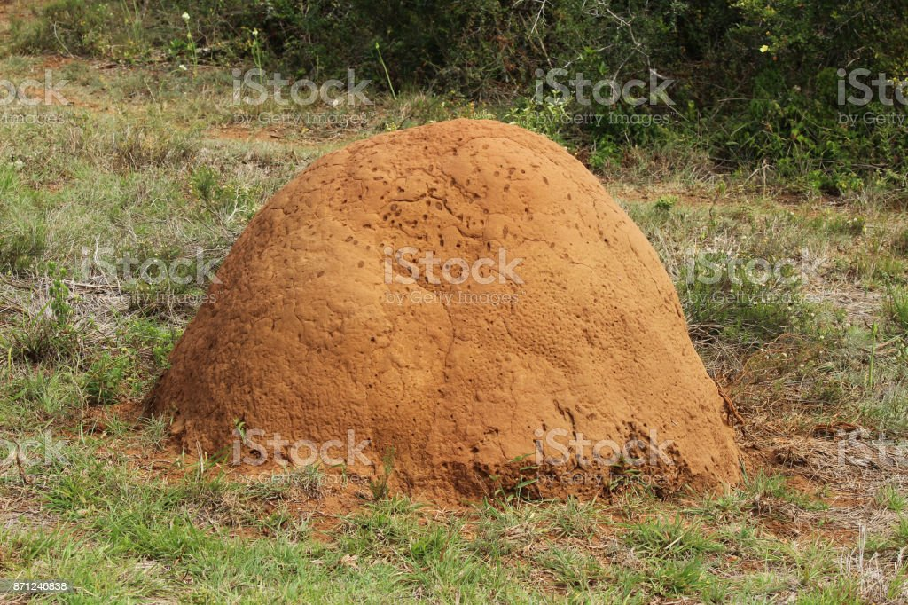 A termite mound in the Addo Elephant National Park in South Africa. stock photo