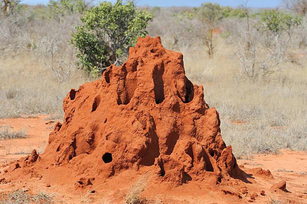 termite mound - termietenheuvel stockfoto's en -beelden