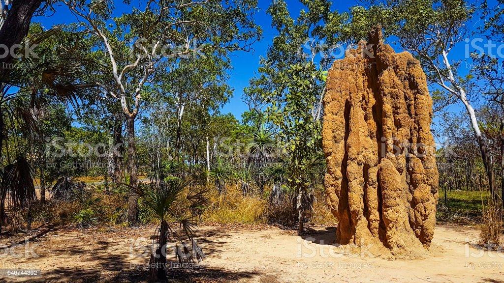 Termite Mound stock photo