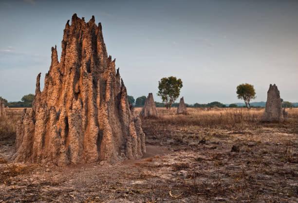termietenheuvels bij dageraad. noordelijk territorium, australië - termietenheuvel stockfoto's en -beelden