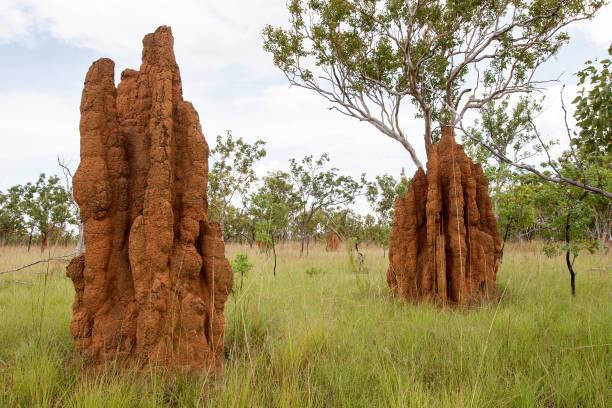termietenheuvels - termietenheuvel stockfoto's en -beelden